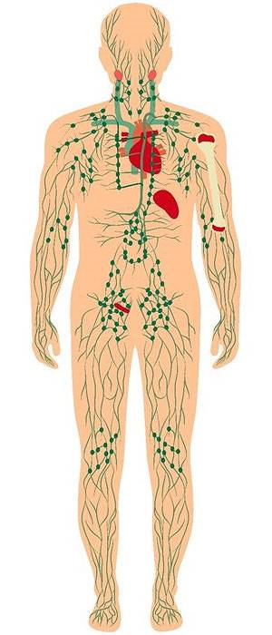 Lymphatic Circulation Helps Reduce Cellulite